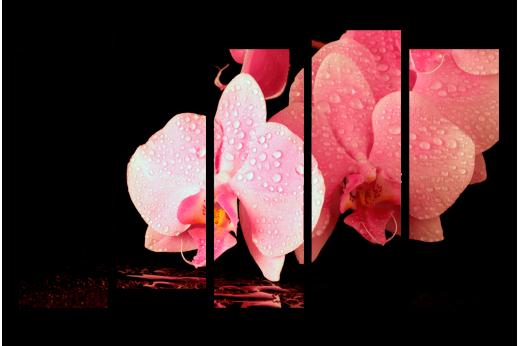 Модульная картина Нежно розовая орхидея