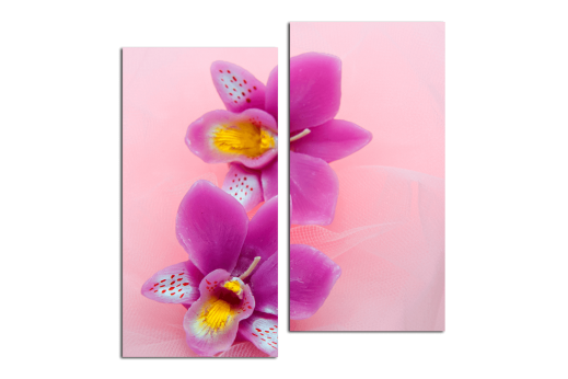 Модульная картина Орхидея на розовом фоне