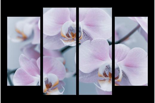 Модульная картина Орхидея белая