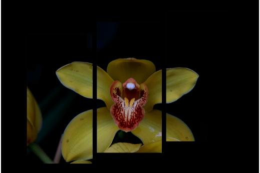 Модульная картина Жёлтая орхидея