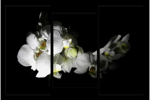 Модульная картина Белая орхидея с каплями