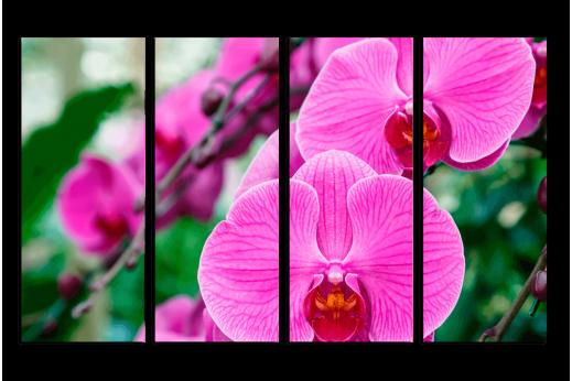 Модульная картина Яркая орхидея