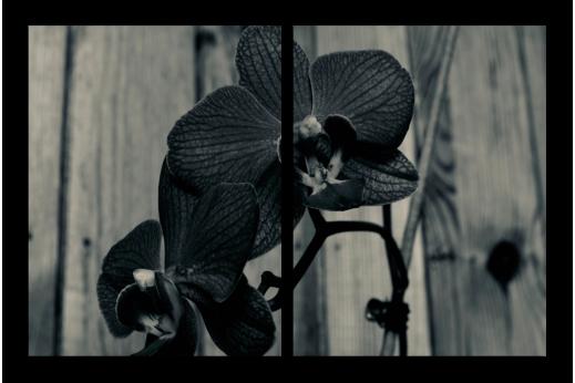 Модульная картина Орхидея ЧБ