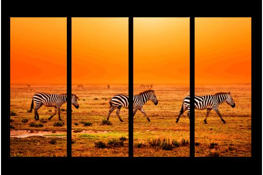 Модульная картина Африканские зебры