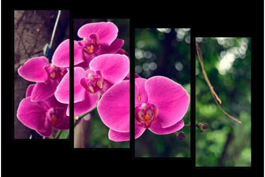 Модульная картина Орхидея