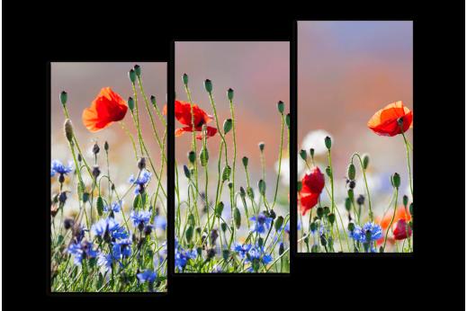 Модульная Полевые цветы Маки