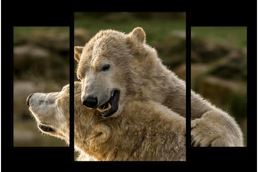 Модульная картина Полярный медведь
