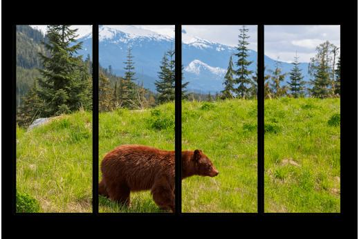 Модульная картина Медведь в горах