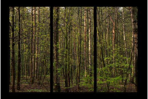 Модульная картина В глубине леса