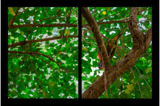 Модульная картина Птичка на ветке